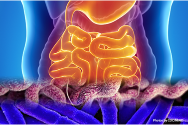Picture of the digestive system and the etiologic agents that cause acute gastroenteritis or travelers' diarrhea. Learn how enteric infections surveillance aids in protecting U.S. Armed Forces and improves readiness.