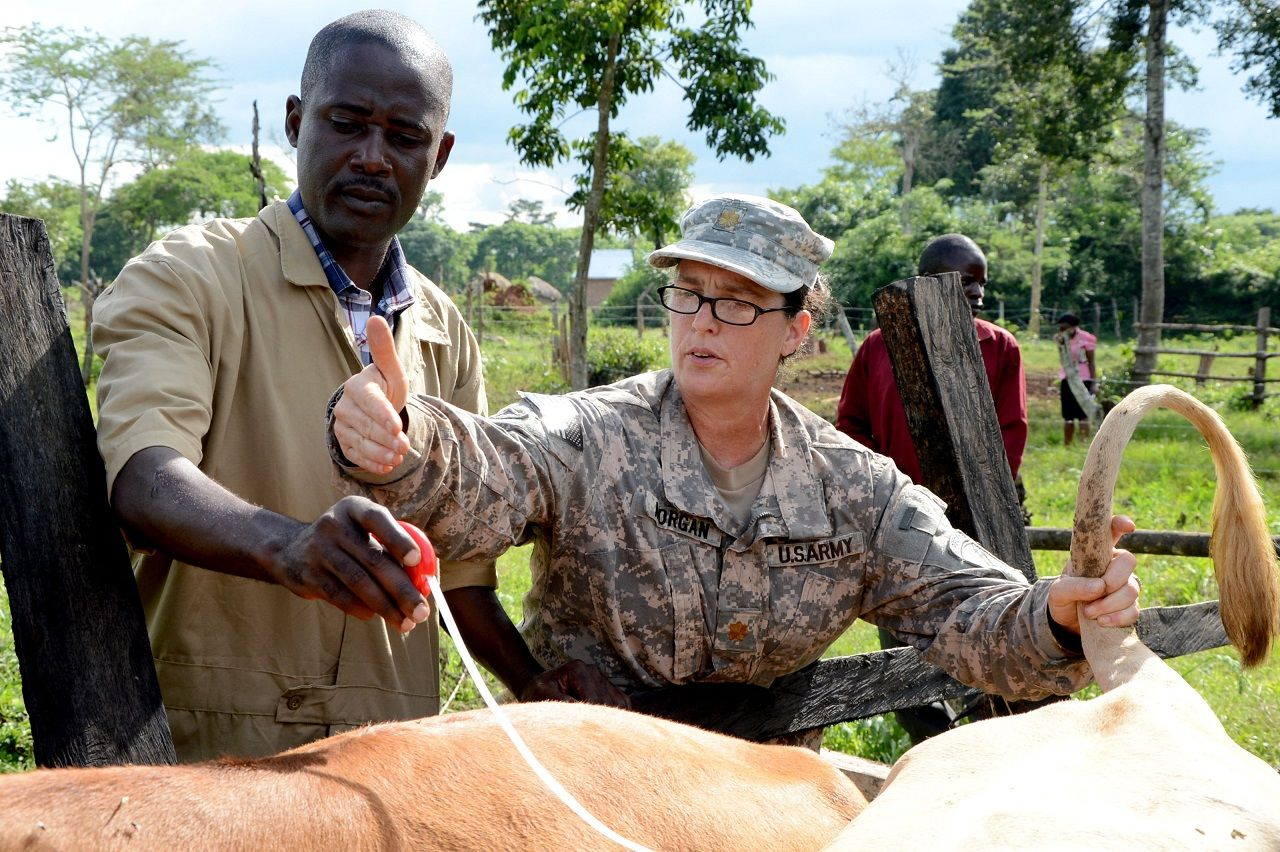 U.S. Army Maj. Thamus Morgan, a veterinarian with the 411th Civil Affairs Battalion, in support of Combined Joint Task Force-Horn of Africa (CJTF-HOA), demonstrates how to administer a taping device that determines the weight of cattle to a Ugandan veterinary care specialist working with the Uganda People's Defense Force (UPDF) at a farm in Luwero, Uganda.