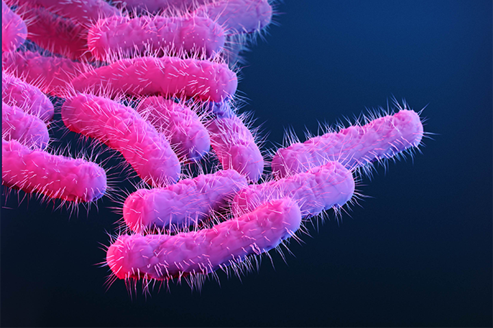This is a medical illustration of drug-resistant, Shigella sp. bacteria, presented in the Centers for Disease Control and Prevention (CDC) publication entitled, Antibiotic Resistance Threats in the United States, 2019 (Content provider: CDC/Antibiotic Resistance Coordination and Strategy Unit; Photo credit:  CDC/Stephanie Rossow).