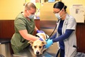 Robin Jones (right), a retired Soldier and current veterinarian who works at the Fort Stewart Veterinary Treatment Facility, is being assisted by Spc. Krystall Shaw, an animal care specialist assigned to the clinic, as Jones uses a stethoscope on a patient to listen for proper breathing at the Fort Stewart Veterinary Treatment Facility on Fort Stewart, Georgia, April 10, 2020. The staff at the clinic continues to provide aid to working and privately owned animals during the COVID-19 pandemic. (U.S. Army photo by Sgt. Zoe Garbarino)