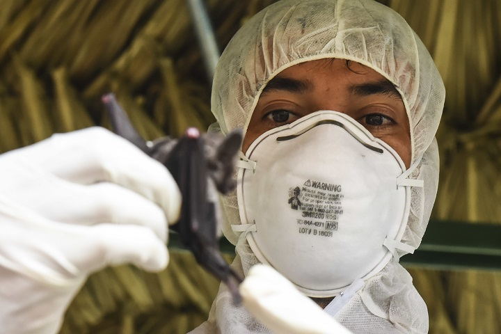 Publio Gonzalez, a biologist with the Gorgas Institute, holds a bat in Meteti, Panama. Gonzalez and U.S. military doctors were participating in infectious diseases training, in which they received informational lectures from Panamanian infectious disease experts and field studies of possible virus-carrying wildlife and insects. The event took place during Exercise New Horizons 2018, which is a joint training exercise where U.S. military members conduct training in civil engineer, medical and support services while benefiting the local community. (U.S. Air Force photo by Senior Airman Dustin Mullen)