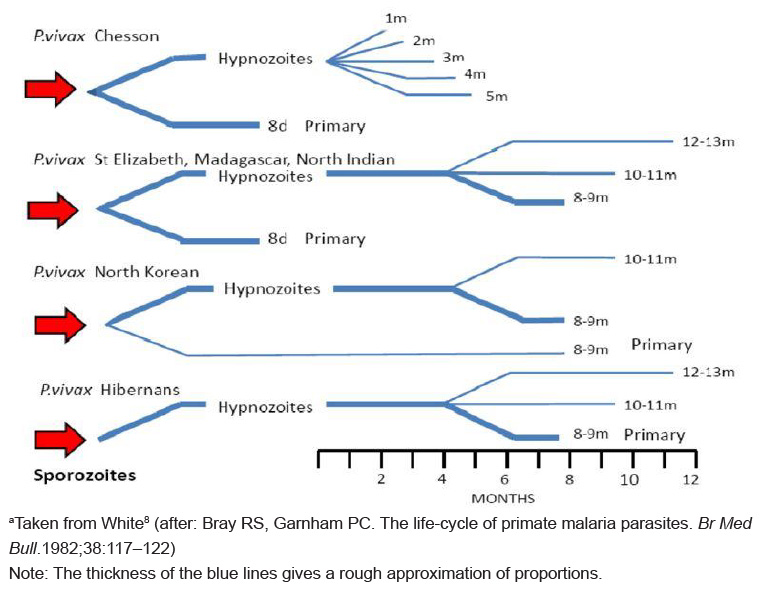 Time between primary infection and clinical illness among different P. vivax strains