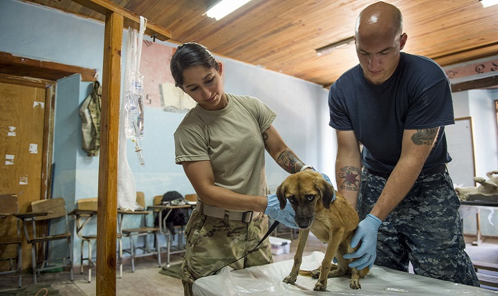 Army Sgt. Katia Rivera, assigned to Public Health Activity-Fort Belvoir, Virginia, and Navy Petty Officer 2nd Class Nathan Rock, attached to Naval Station Everett, Washington, inspect a dog for fleas during a veterinary checkup in support of Continuing Promise 2017's visit to Trujillo, Honduras. (U.S. Navy photo by Petty Officer 2nd Class Shamira Purifoy)