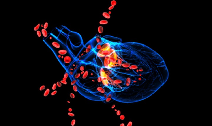 A blue 3D drawing of a human heart with large red blood cells flowing out. According to the Centers for Disease Control and Prevention, 321,000 men died from heart disease in 2013, or one in every four male deaths. (NIH courtesy image)